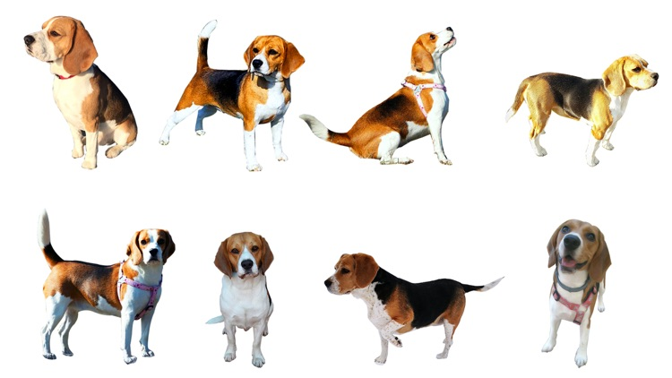 Beaglemoji - emoji keyboard screenshot-4