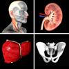 Anatomie Quiz Pro