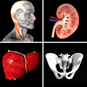 Anatomy Quiz Pro app
