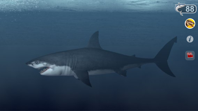 Talking Great White : My Pet Shark-3