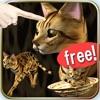 猫っとベンガルがネコっ可愛くなでまくり遊べる無料ペットねこアプリ!アイコン