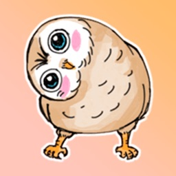 Funny Owl Stickers