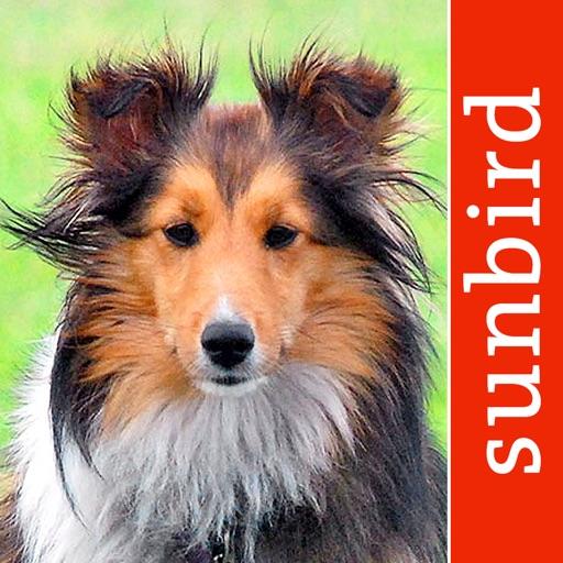 Hunde Id - Welcher Hund passt zu mir? Sunbird Ratgeber zur Auswahl der passenden Hunderasse