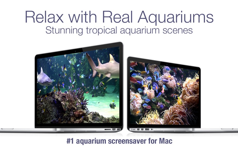 Aquarium Live HD screensaver iphone ekran görüntüleri