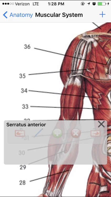 Anatomy Lite screenshot-3