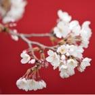 はなといろカレンダー - そよ風に揺れる美しい花たち - 2012 icon