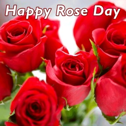 Rose Day 2017