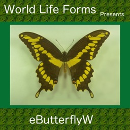 Butterflies of the World - A Butterfly App