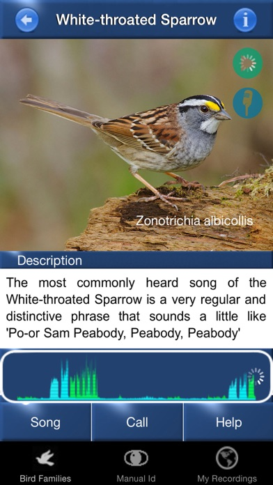 Bird Song Id USA Automatic Recognition Birds Songs-1