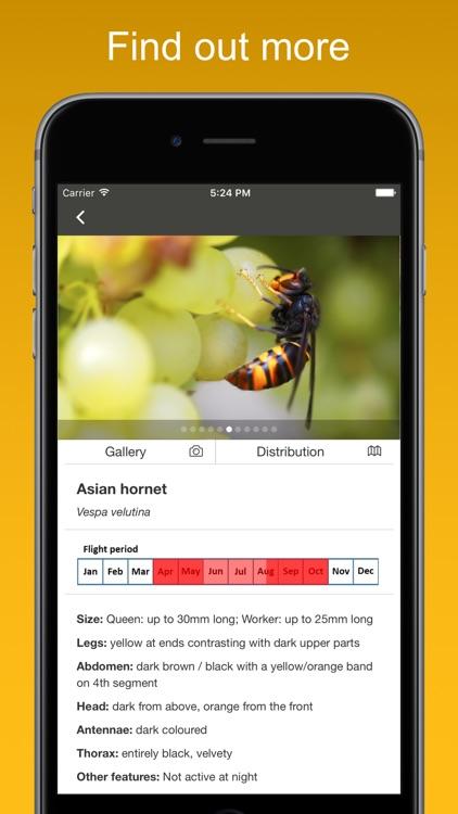 Asian Hornet Watch