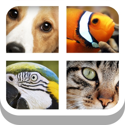 Close Up Animal Quiz - Cat & Dog Trivia Games Free