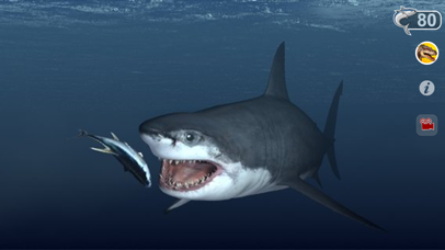 Talking Great White : My Pet Shark-1