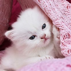 246x0wg cute kitty wallpapers hd cat kitten pictures 4 voltagebd Choice Image