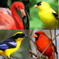 Codes for Bird World - Quiz about Famous Birds of the Earth Hack