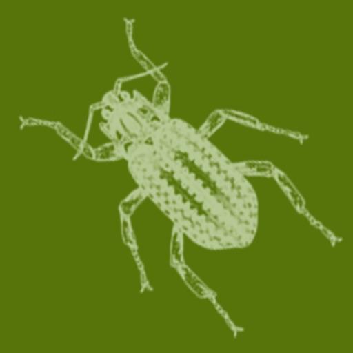 Aqua Bugs