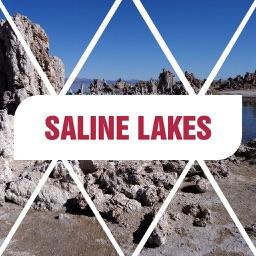 Saline Lakes