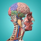 Anatomie et Physiologie - anatomie du corps humain icon