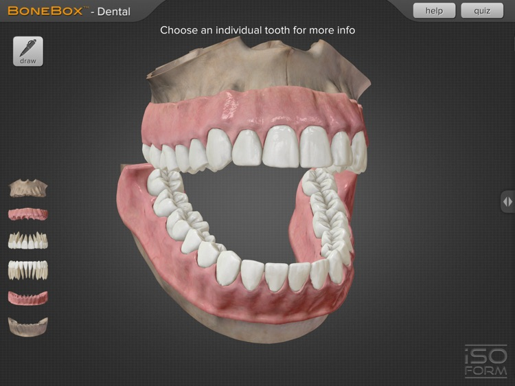 BoneBox™ - Dental Pro
