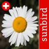 Blütenpflanzen Schweiz Blumen, Sträucher, Bäume