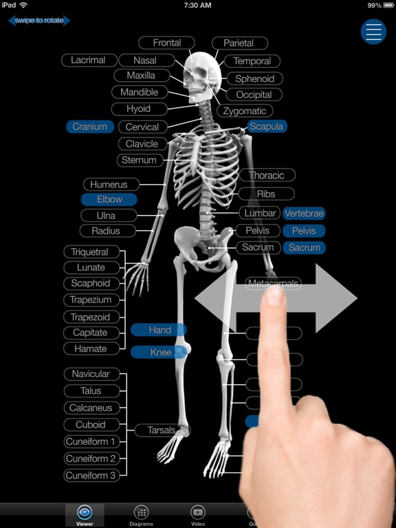 Skeletal Anatomy 3D - Quiz and Reference | App Price Drops