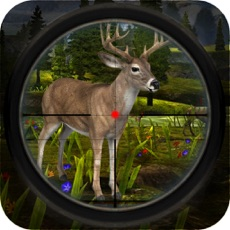 Activities of Wild Deer Shooting: Sniper Hunting Session
