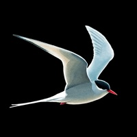 Codes for Collins Bird Guide Hack