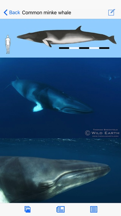 Dolphins and Whales screenshot-1