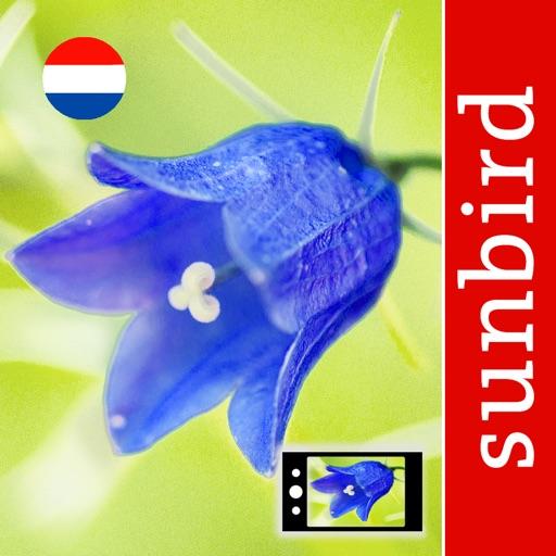 Wild Flower Id Netherlands
