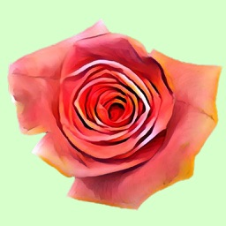 Hipster Roses