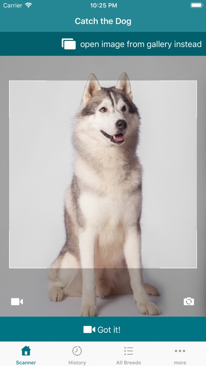 Dog Scanner screenshot-0