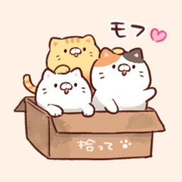 Soft and cute cats