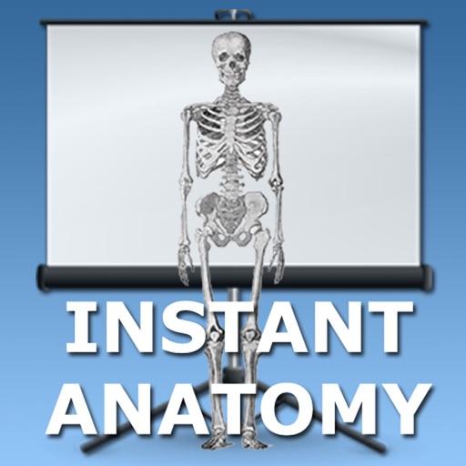 Anatomy Topics in Focus