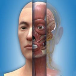 人卫3D人体解剖图谱