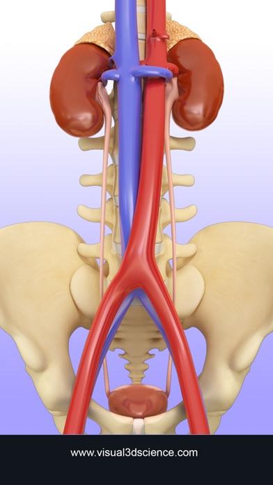 Urinary System screenshot one