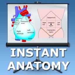 Anatomy Thorax and Abdomen