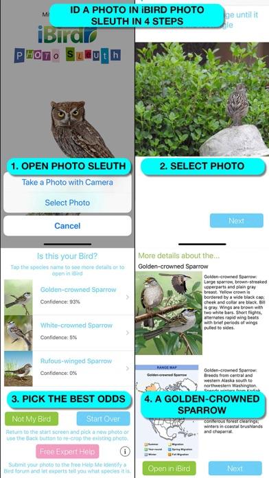 iBird Lite Guide to Birds Screenshot