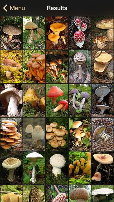 iFunch - Mushrooms and AIのおすすめ画像3