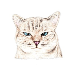 I Am Your Cat Sticker Pack