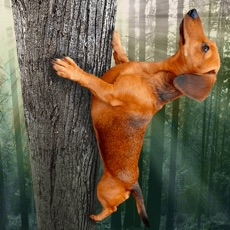 Activities of Wild Wiener!