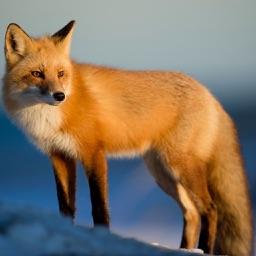 Fox Hunting Calls