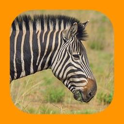 Animals of Pilanesberg