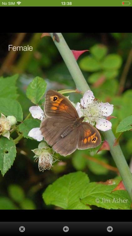 iRecord Butterflies screenshot-3