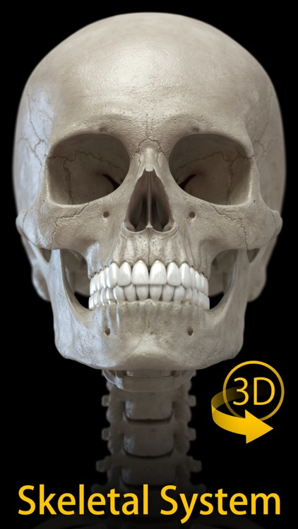 Skeleton 3D Anatomy screenshot-0