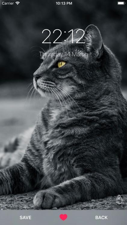 Cat Wallpapers ° screenshot-3