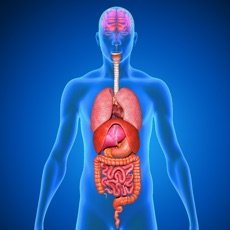 Activities of Menschliche Körper Anatomie