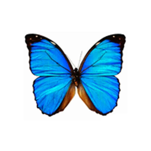 Dancing Butterfly icon