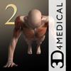 iMuscle 2 - 3D4Medical.com, LLC