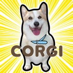Corgi the Lowrider