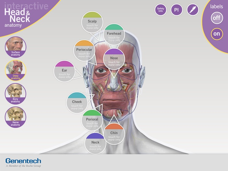 3D Facial Anatomy Tool screenshot-4
