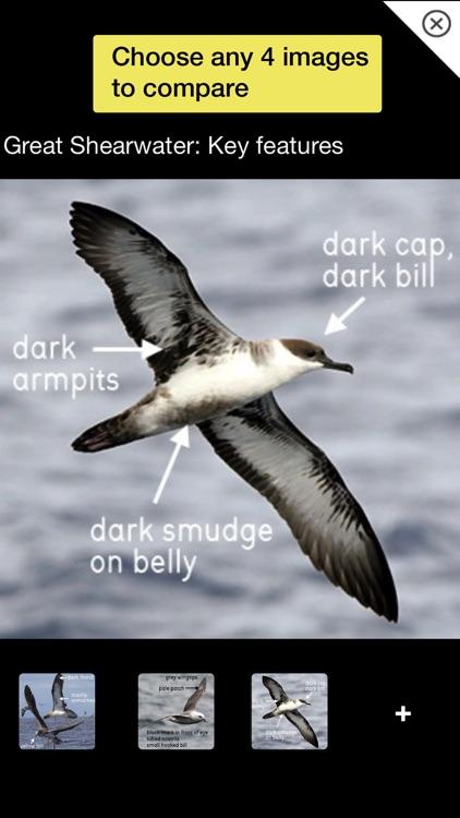 Birds of Britain Pro screenshot-7